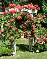 Climbing Rose Trellis Home Decor