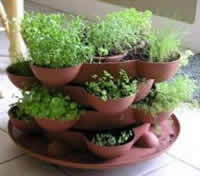 Growing Culinary Herbs