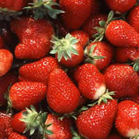 Growing Strawberries Tips