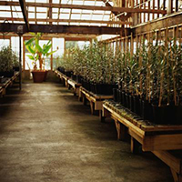 Hydroponic Fertilizers