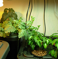 Hydroponics How To