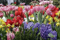 Bulb Flower Garden Landscaping Ideas