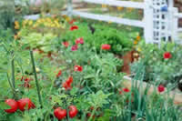 Vegetable Garden Layouts Landscaping Ideas