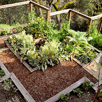 Raised Bed Vegetable Gardens