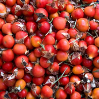 What are Rose Hips?