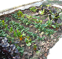 Winter Vegetable Gardens