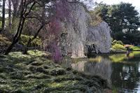 Brooklyn Botanic Gardens