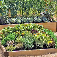 Companion Vegetable Gardens