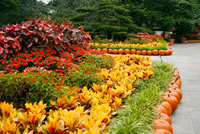 Dallas Arboretum Autumn Flowerbed