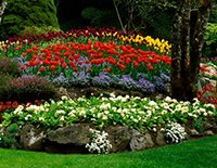 Flower Garden Ideas