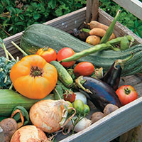 How To Grow Vegetable Gardens
