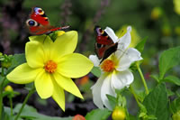 Butterfly Garden Landscaping Ideas