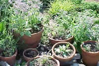 Landscaping Ideas Growing Herbs