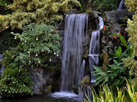Los Angeles Arboretum Waterfalls